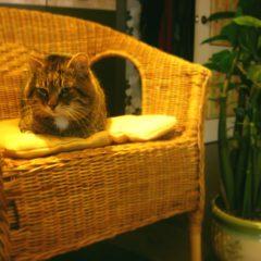 Как ухаживать за мебелью из ротанга