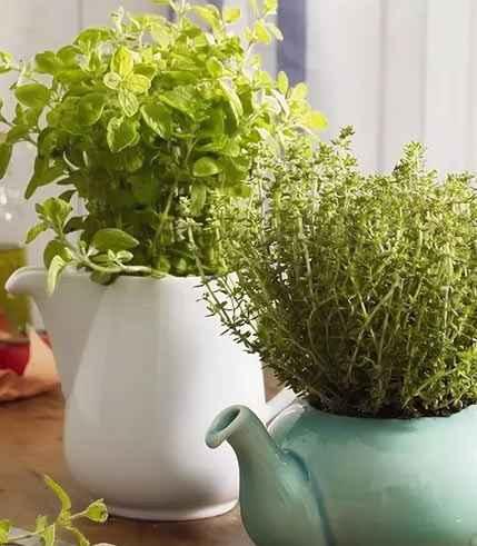 Пряные травы от неприятных запахов