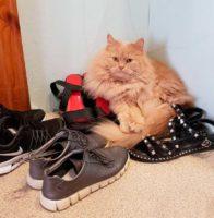 Как убрать заломы на кожаной обуви