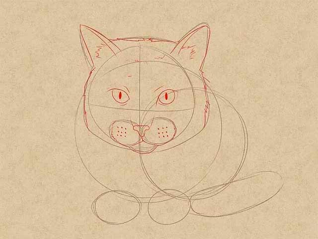 Как нарисовать лежачую кошку спереди - Детализируйте лицо кошки.