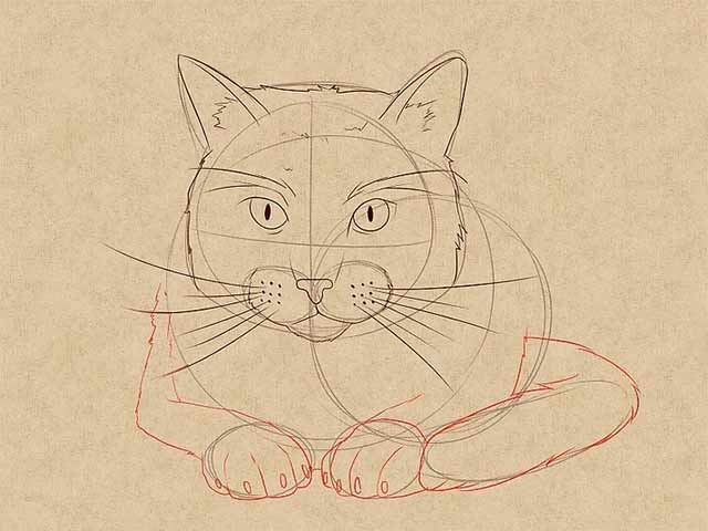 Как нарисовать лежачую кошку спереди - Нарисуйте лапы кошки, хвост и когти.