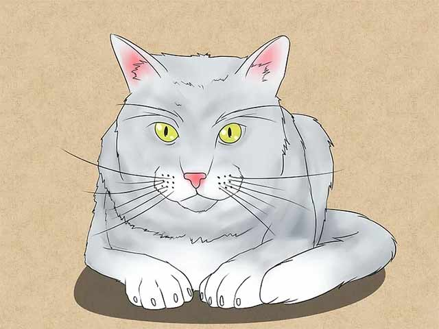 Как нарисовать лежачую кошку спереди - Сотрите ненужные линии и раскрасьте рисунок!