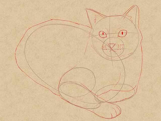 Как нарисовать лежачую кошку - Дорисуйте основные черты кошки.