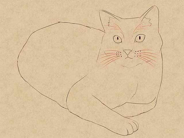 Как нарисовать лежачую кошку - Сотрите черновые линии и добавьте больше деталей.
