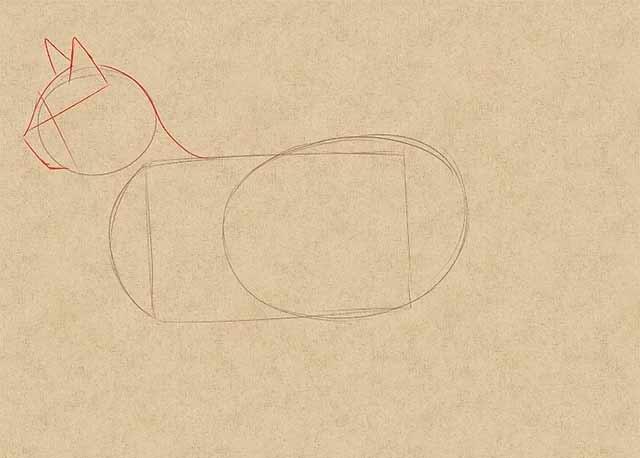 Как нарисовать кошку - Нарисуйте основные черты мордочки.