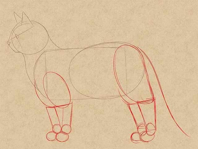 Как нарисовать кошку - Рисуем ноги.