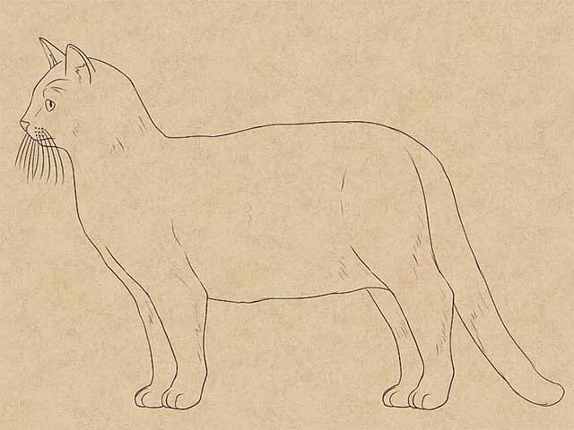 Как нарисовать кошку - Сотрите черновые линии и добавьте больше деталей на эскиз.