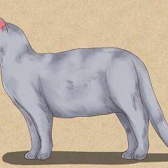 Как нарисовать кошку карандашом для начинающих поэтапно