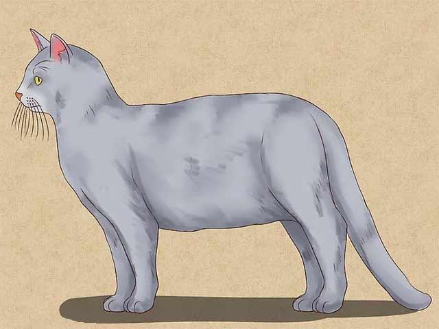 Как нарисовать кошку - Раскрасьте нарисованную кошку.