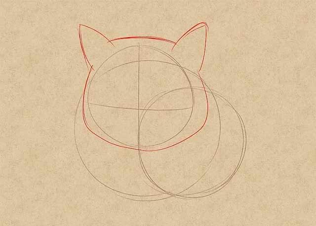 Как нарисовать лежачую кошку спереди - Нарисуйте контур мордочки кошки.
