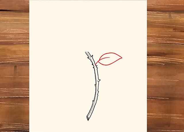 Как нарисовать розу со стеблем - Нарисуйте листик, растущий из верхней правой части нашего колючего стебля.
