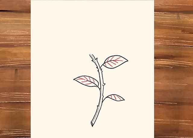 Как нарисовать розу со стеблем - Добавьте немного деталей листьям, нарисуйте на них несколько жилок.