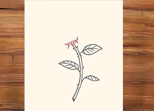Как нарисовать розу со стеблем - Дальше рисуем чашелистик - это будет основание или чашечка нашего цветка.
