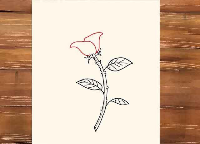 Как нарисовать розу со стеблем - Нарисуйте пару лепестков из центра розы.