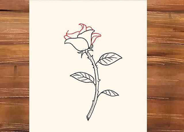 Как нарисовать розу со стеблем - Добавьте ещё несколько лепестков направленных вверх и к центру.