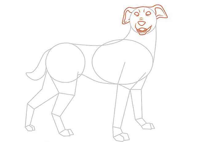 Как нарисовать мультяшную взрослую собаку - К маленькому кругу добавьте детали головы собаки.