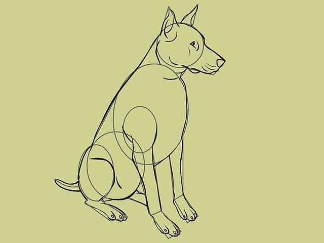 Как нарисовать собаку - Обведите примерный контур собаки