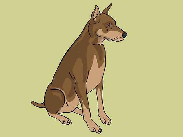 Чтобы закончить рисунок, раскрасьте собаку.