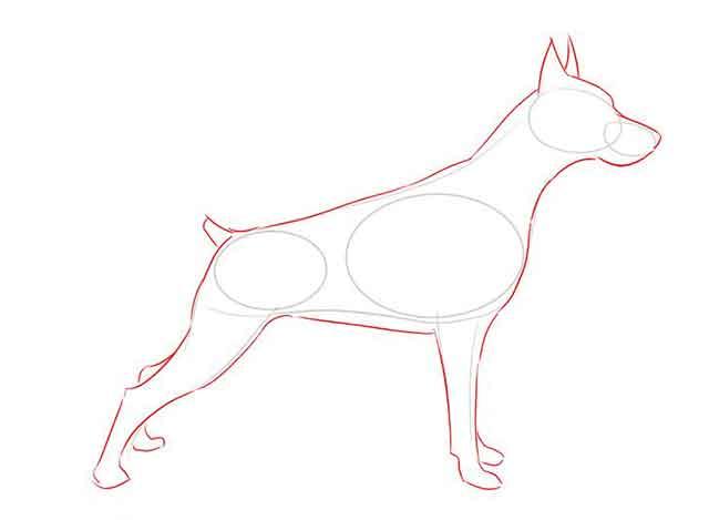Как нарисовать добермана - Добавьте дополнительные детали к эскизу.