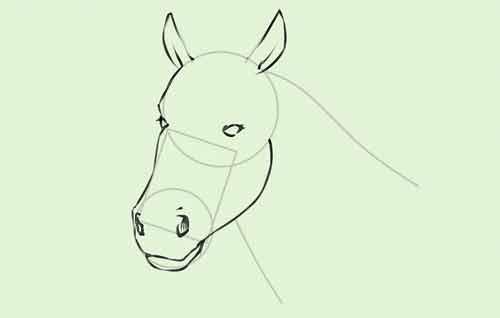 Голова лошади поэтапно карандашом 6