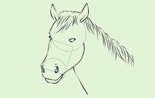 Голова лошади поэтапно карандашом для начинающих 7