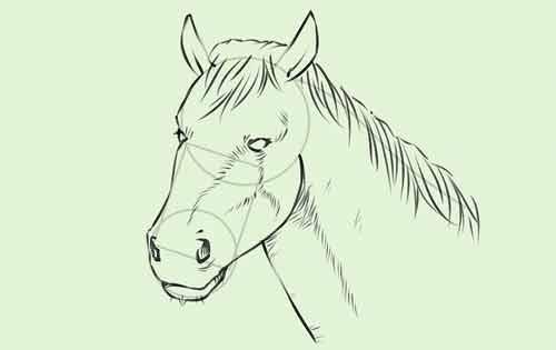 Голова лошади поэтапно карандашом для начинающих 8