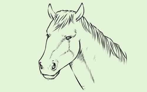 Как нарисовать голову лошади легко и просто 9