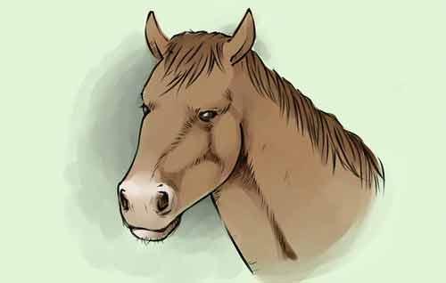 Как нарисовать голову лошади легко и просто 10