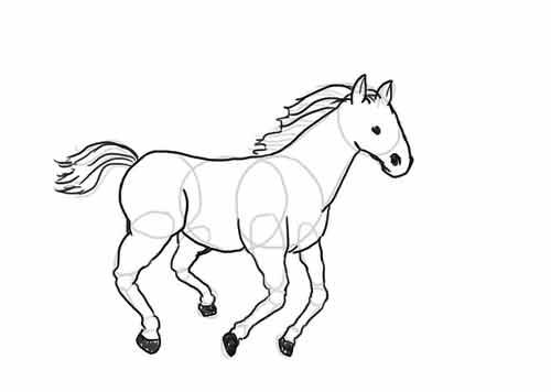 Как нарисовать лошадь начинающему карандашом 9