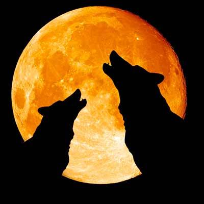 Как нарисовать волка воющего на луну