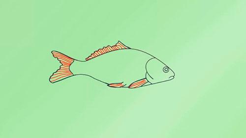Как легко нарисовать реалистичную рыбку - Шаг 7