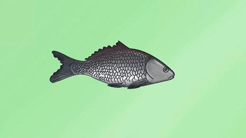 Как легко нарисовать реалистичную рыбку - Шаг 9