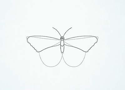Как нарисовать реалистичную бабочку - Шаг 9