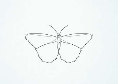 Как нарисовать реалистичную бабочку - Шаг 10