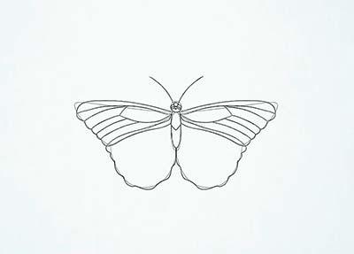 Как нарисовать реалистичную бабочку - Шаг 11