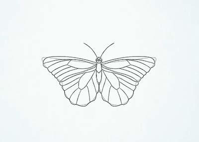 Как нарисовать реалистичную бабочку - Шаг 12