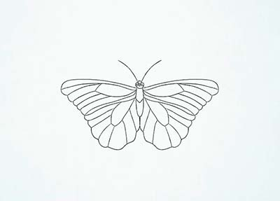 Как нарисовать реалистичную бабочку - Шаг 13