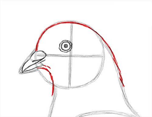 Как нарисовать голубя легко и просто - Шаг 10