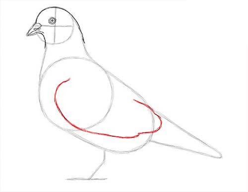 Как нарисовать голубя легко и просто - Шаг 11