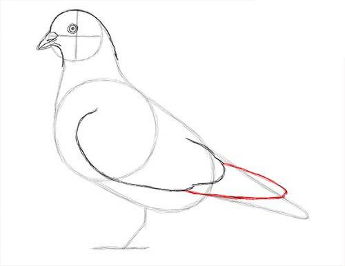 Как нарисовать голубя легко и просто - Шаг 12