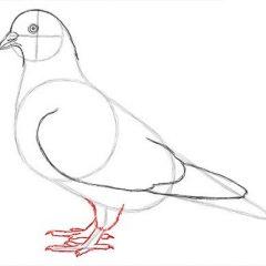 Как нарисовать голубя легко и просто для детей