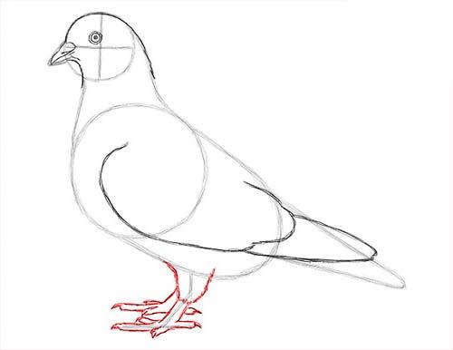 Как нарисовать голубя легко и просто - Шаг 13