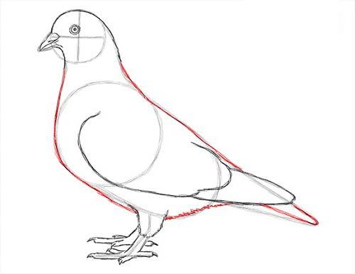 Как нарисовать голубя легко и просто - Шаг 14