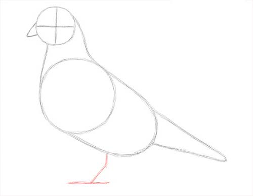 Как нарисовать голубя легко и просто - Шаг 7