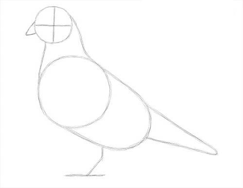 Как нарисовать голубя легко и просто - первоначальный набросок голубя