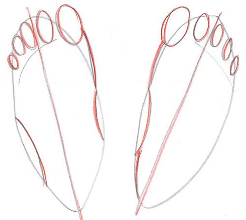 Рисуем две ступни - вид сверху - Шаг 4