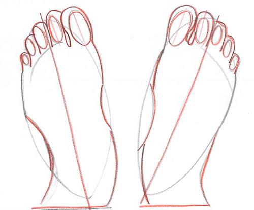 Рисуем две ступни - вид сверху - Шаг 6