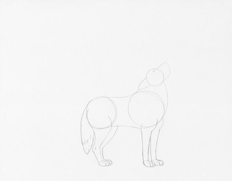 Шаг 3: Прорисуйте лапы волка