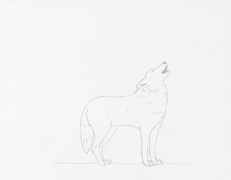 Шаг 5: Сотрите ненужные линии на эскизе с волком