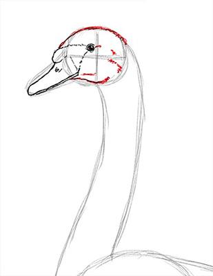 Как нарисовать лебедя карандашом - Шаг 10